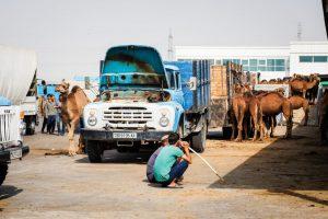 Kamelmarkt Ashgabat