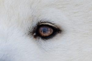 HiRes Ausschnitt mit Spiegelung Fotograf im Auge