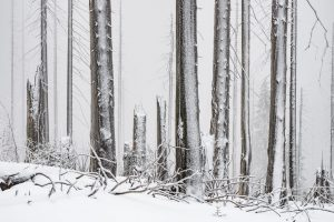 Bayerischer Wald am Dreisessel (HiRes)