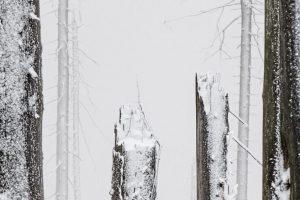 Bayerischer Wald am Dreisessel (HiRes - Ausschnitt)